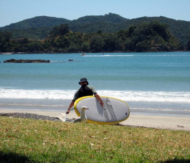 Fun at Oakura Bay, Whangaruru, Northland, New Zealand
