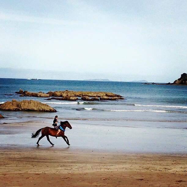Oakura Bay, Northland horse-riding on the beach